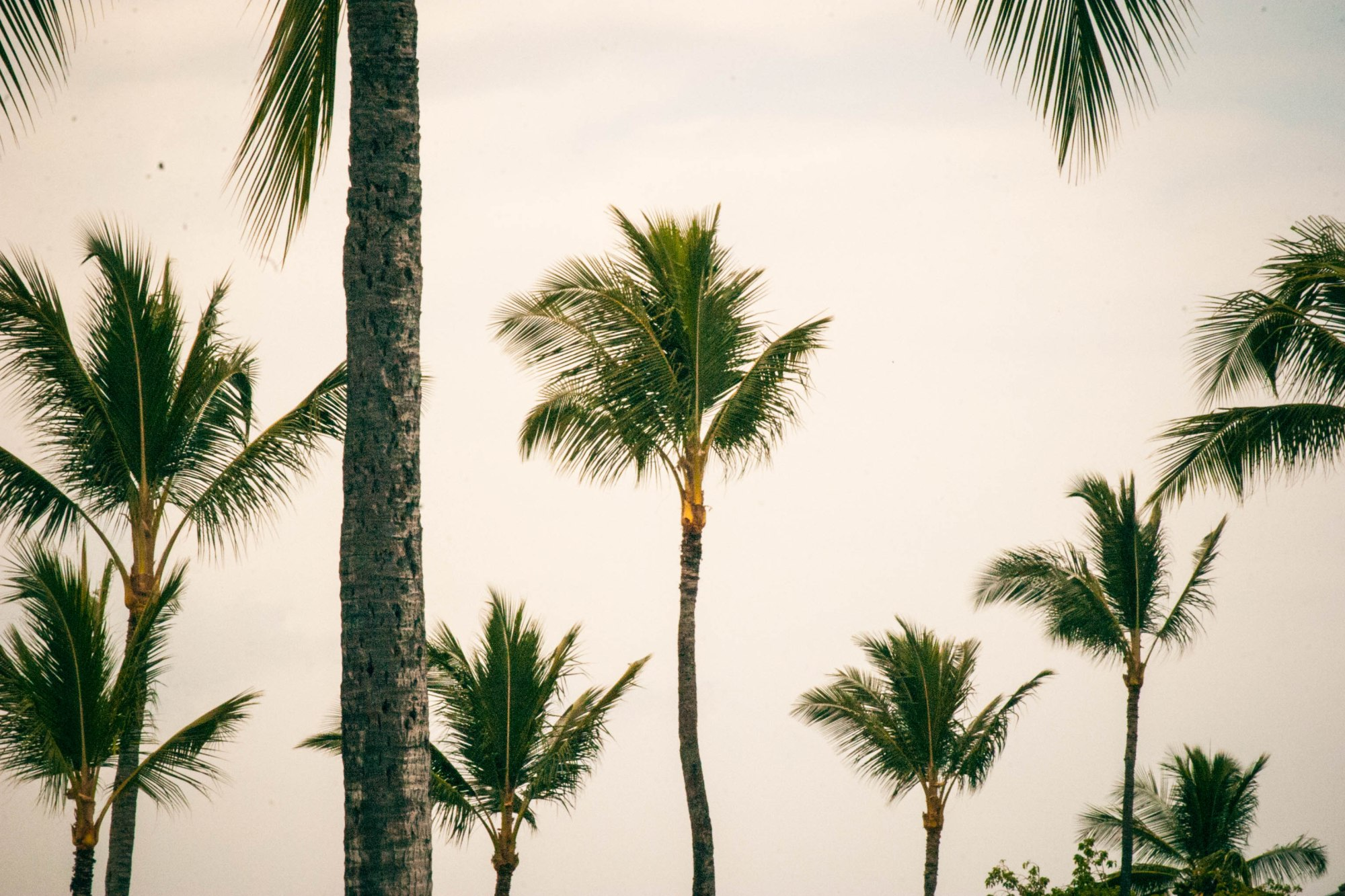 HAWAII-9425