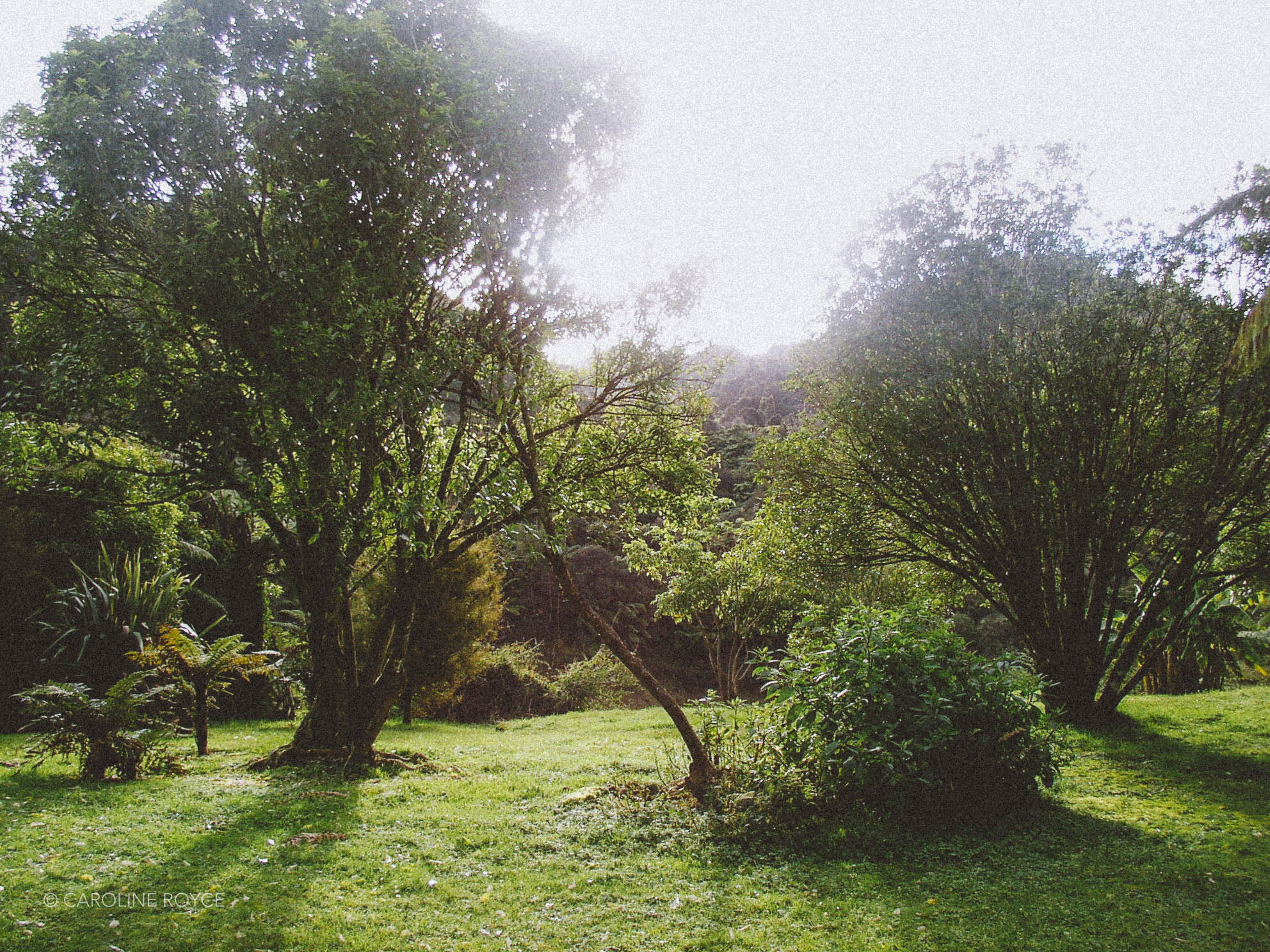 NEW-ZEALAND-187