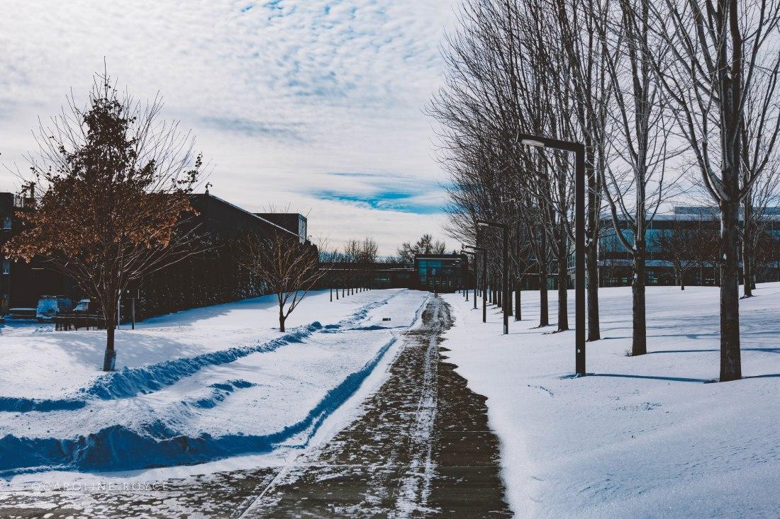 SNOW_FEB-3