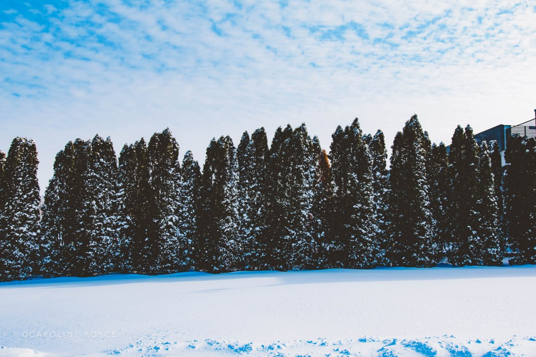 SNOW_FEB-5