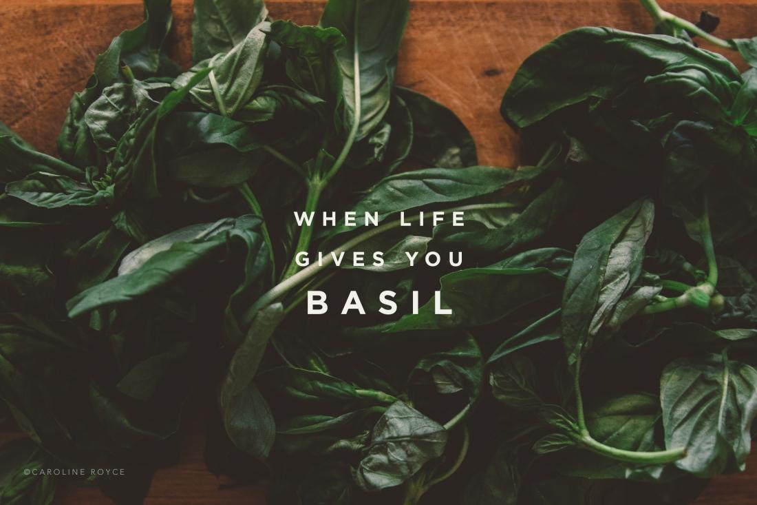 BASIL-1 copy